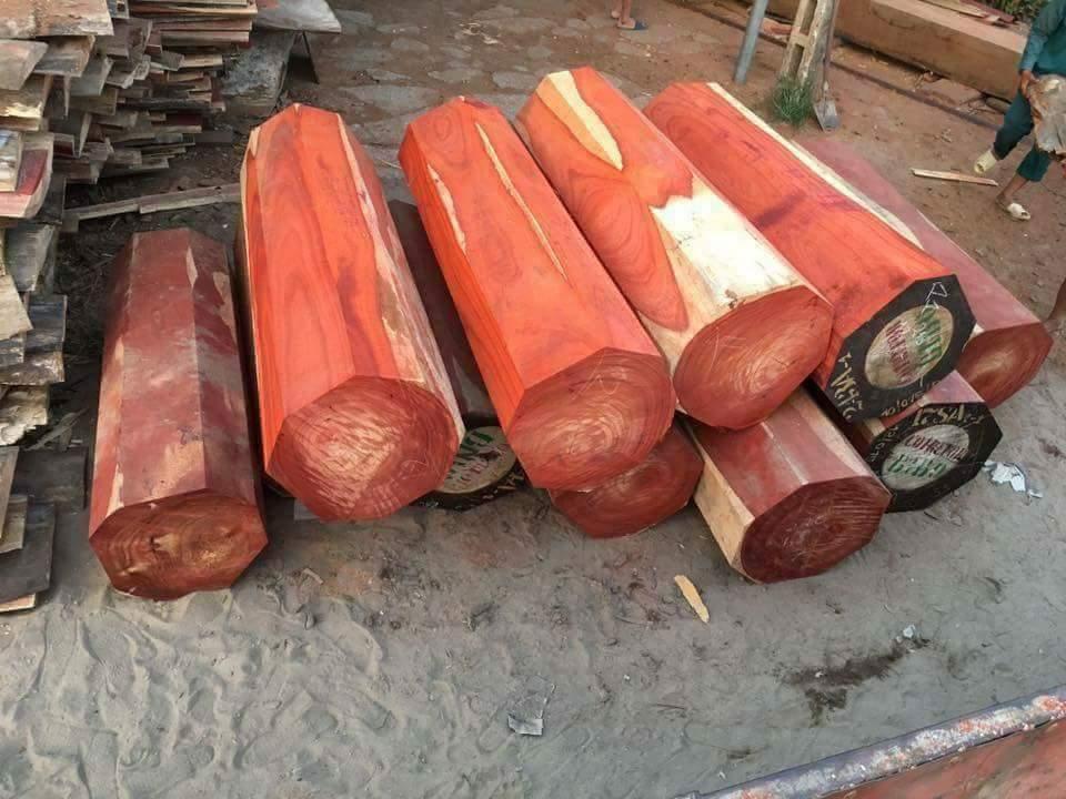 gỗ hương nam phi